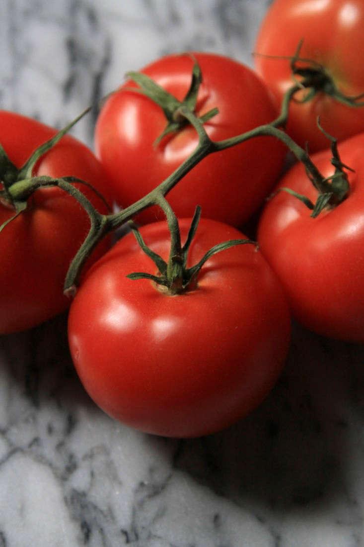 winter-tomatoes-erin-boyle-7-gardenista