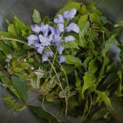 wisteria leaves & flowers in bowl_1