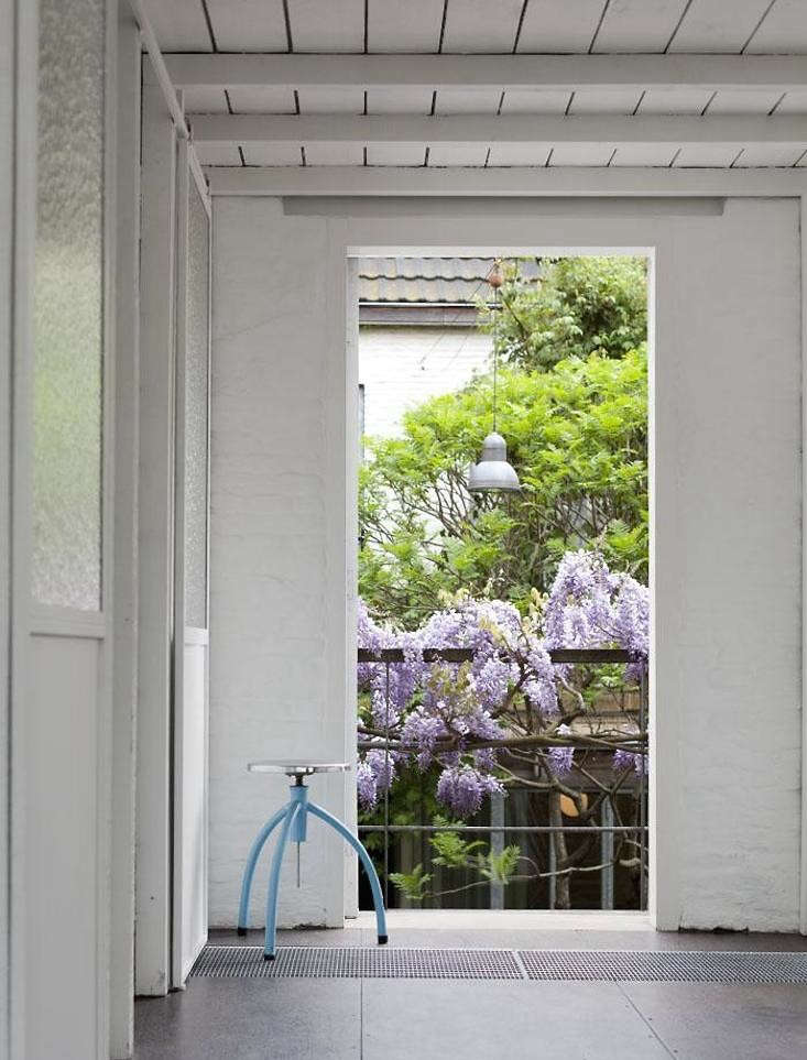 wisteria-vine-bloom-balcony-railing-gardenista