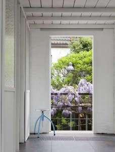 Wisteria in bloom on a balcony railing in Antwerp ; Gardenista