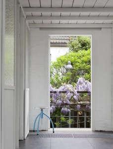 Wisteria in bloom on a balcony railing in Antwerp ; Gardenista