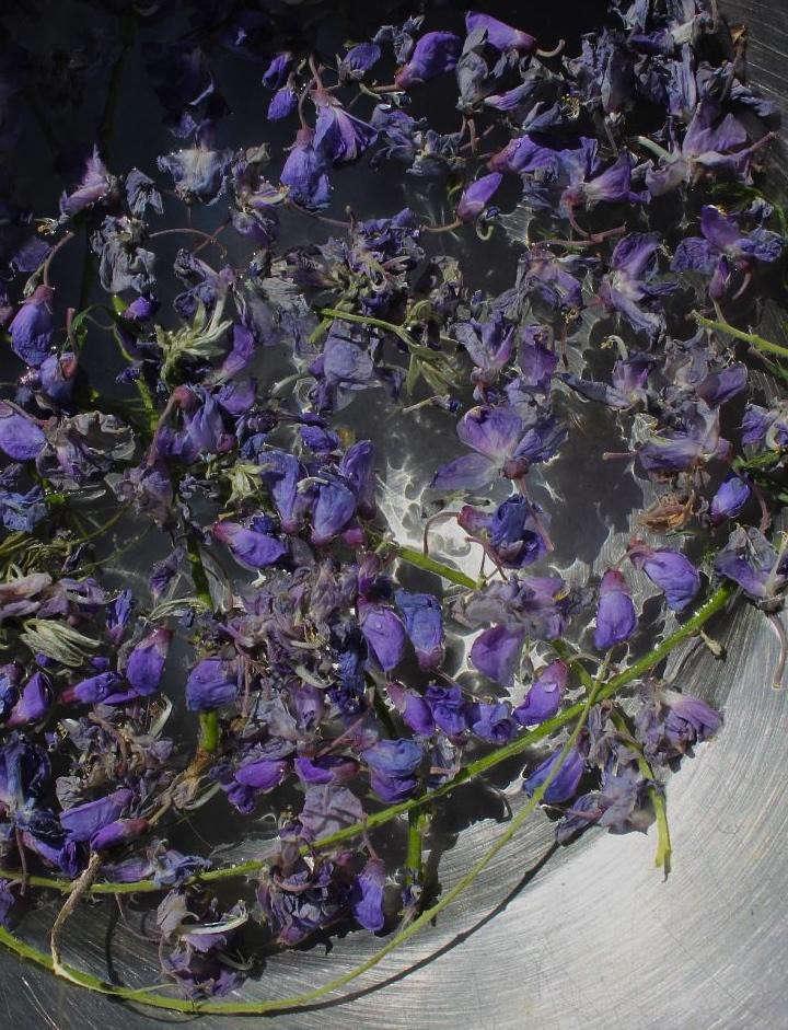 wisteriapurple-petals-dye
