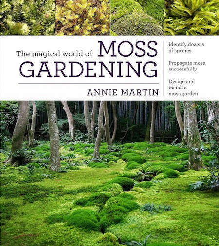 world-of-moss-gardening-gardenista