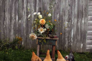 Worlds End Farm ; Gardenista ; chickens