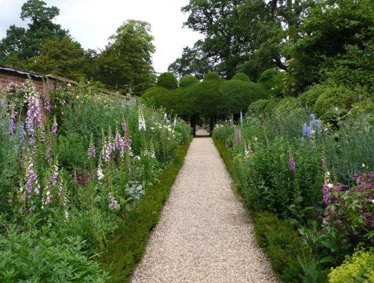 yew-edging-replace-boxwood-gardenista