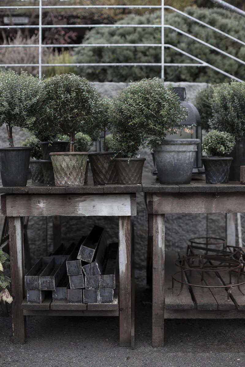zetas-tradgard-christmas-topiary-boxwood-gardenista