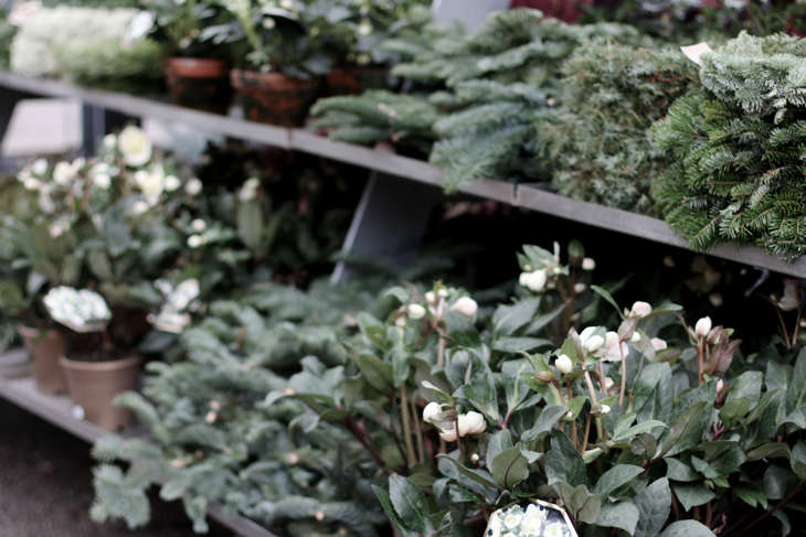 zetas-tradgard-nursery-stockholm;cyclamen-gardenista