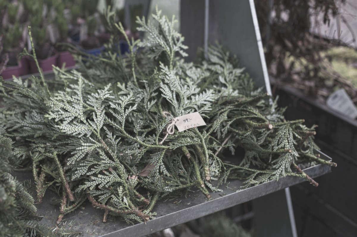 zetas-tradgard-stockholm-christmas-boughs-gardenista