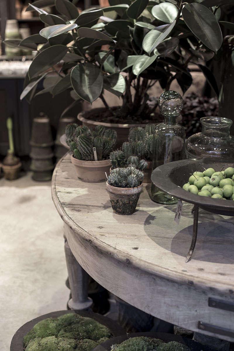 zetas-tradgard-succulents-christmas-cactus-gardenista