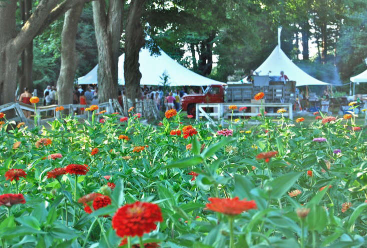zinnias and dinner at the farm tents – gardenista