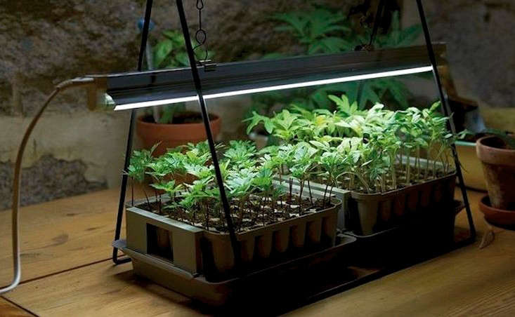 Grow-lights-plant-stand-LED-gardenista
