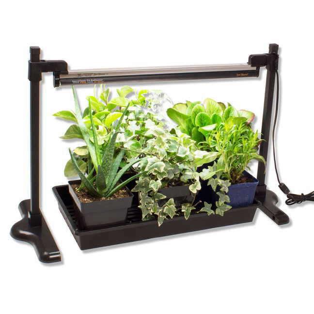 how to start seeds grow lights indoor