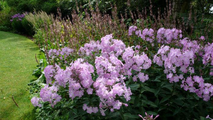 beth-chatto-garden-phlox-gardenista
