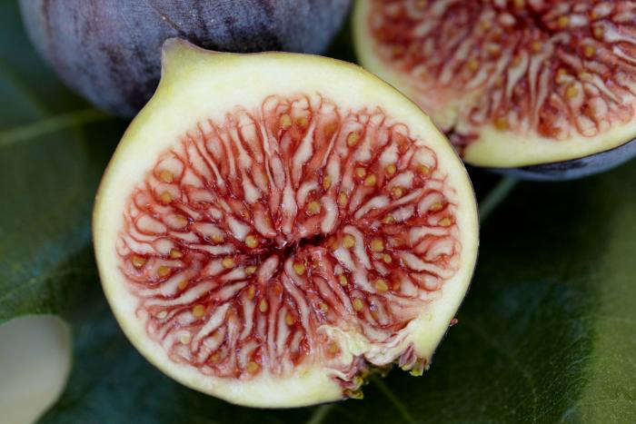 Best Fruit Trees For North Carolina Part - 29: Gourmet Fig Trees