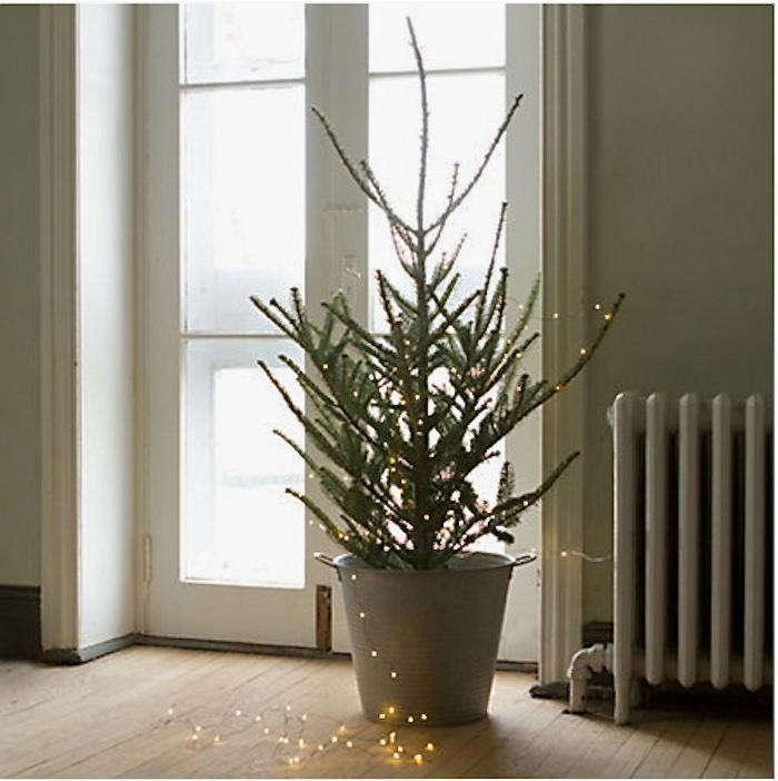 Steele S Christmas Tree Farm: Tabletop Fraser Fir: Gardenista