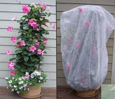 Bag Xl Frost Protection Plant Cover Green Gardenista