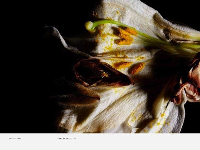 700_a-page-from-the-encyclopedia-of-flowers-2-jpeg