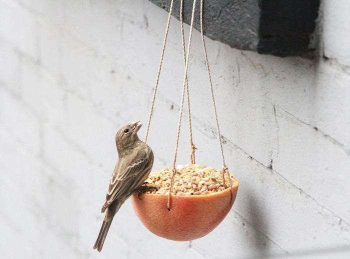 700_erin-boyle-birdfeeder-jpeg