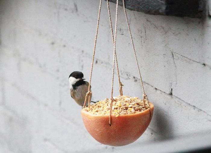 700_erin-boyle-black-headed-bird-jpeg