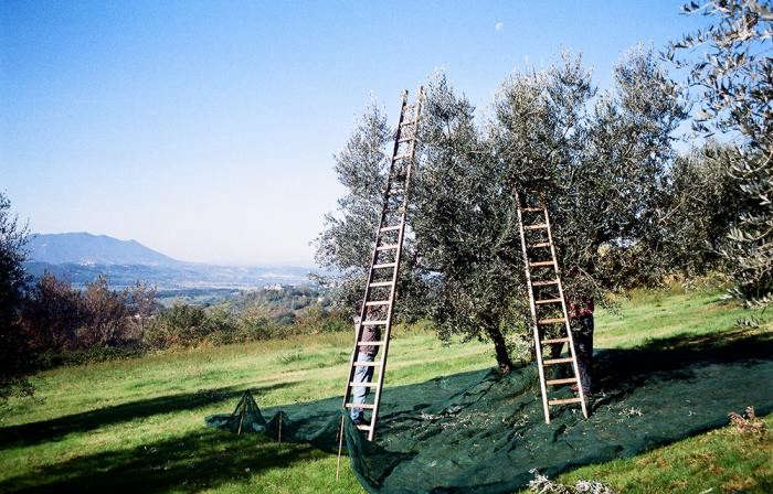 700_ladders-and-cloths-oil