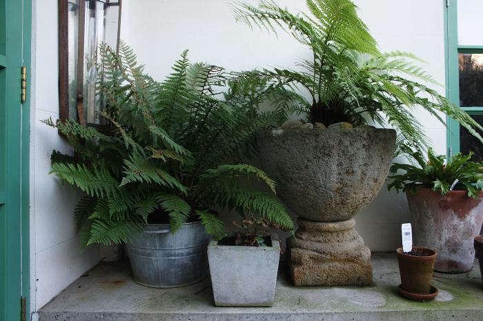 700_rmneisha-crosland-garden-05