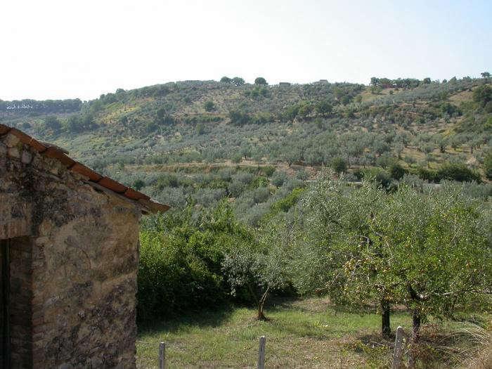 700_sabine-hills-olives-near-casa-poggio-