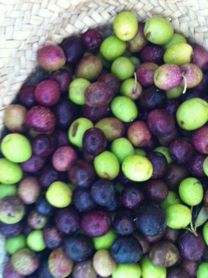 700_sarah-photo-of-olives-with-iphone