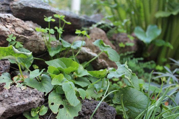 700_weeds-and-rocks-closeup