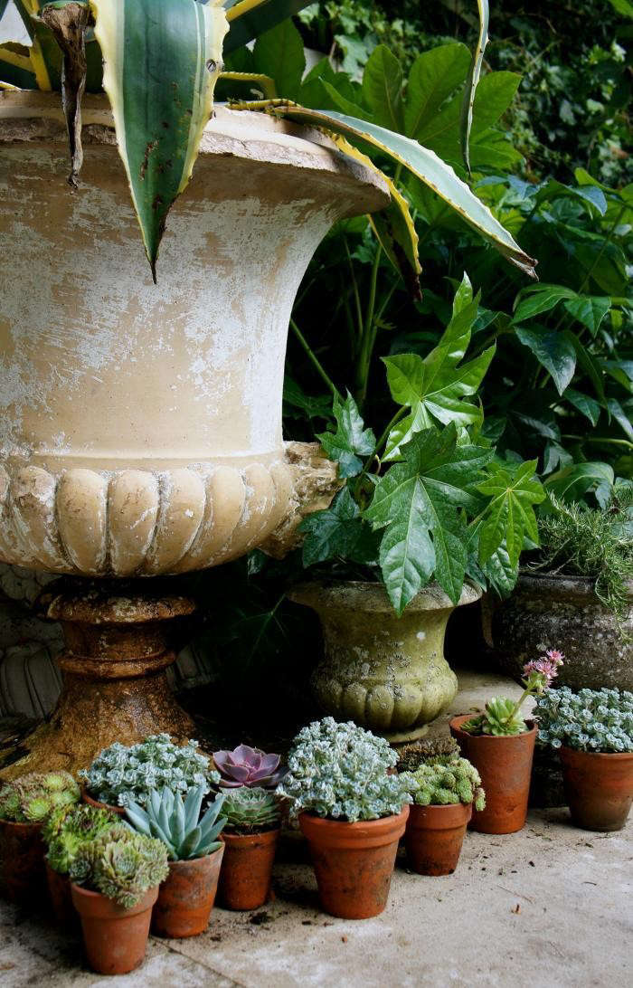 700_will-fisher-potted-succulents