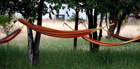 El-cosmico-hammock-grove