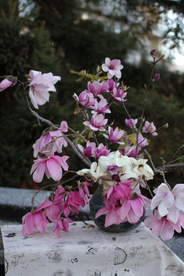 640_louesa-magnolia-flowers-2
