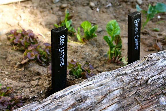 gardenista-botanical-marker-plant-stake