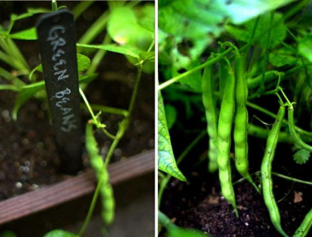 gardenista-botanical-markers-diy-ornari