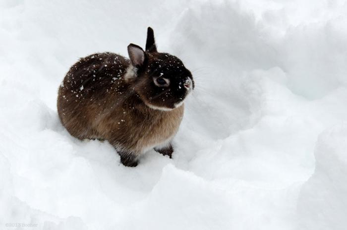 700_bunny1-web-jpeg
