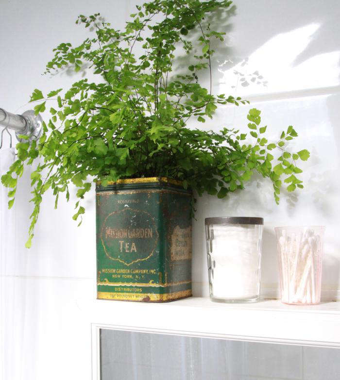 DIY Maidenhair Fern For Bathroom Greenery Gardenista