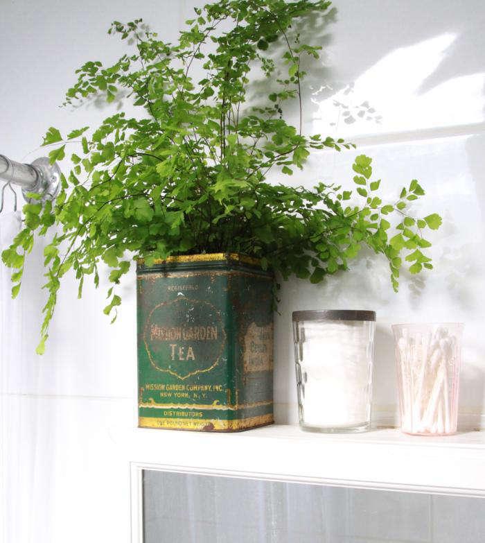700_button-fern-in-antique-tea-tin