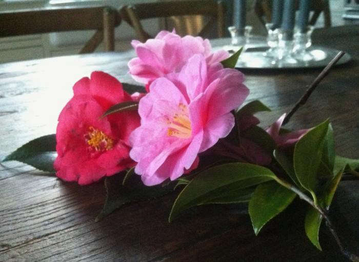 700_camellias-on-the-kitchen-table