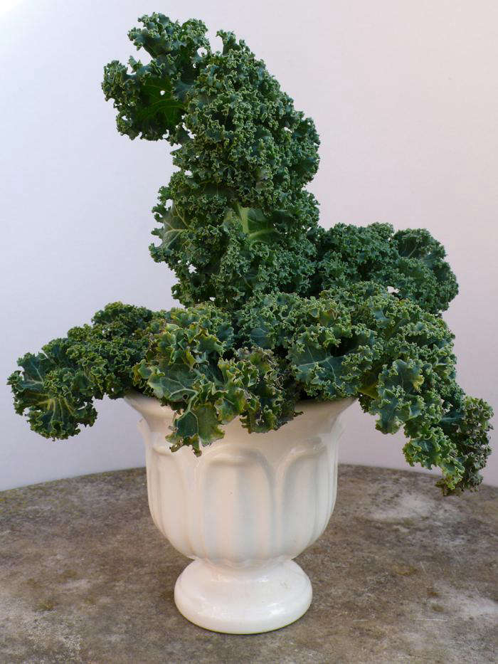 700_kale-in-vase-spry