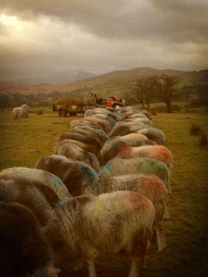 700_multi-colour-fleeces