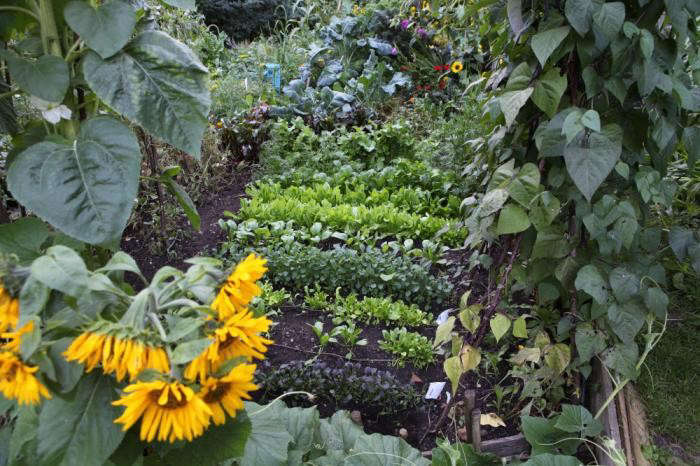700_plot-with-sunflowers-plot-29