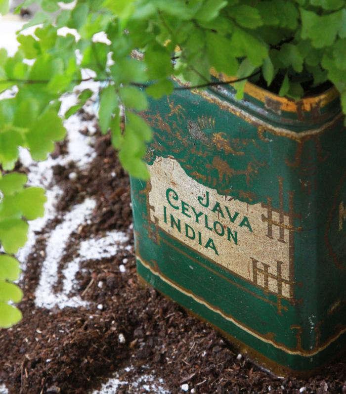700_potting-button-fern-in-vintage-tea-tin