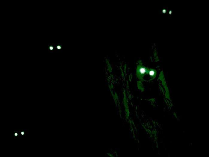 night-eye-group