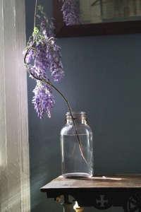 Wisteria in jar by Amy Merrick ; Gardenista