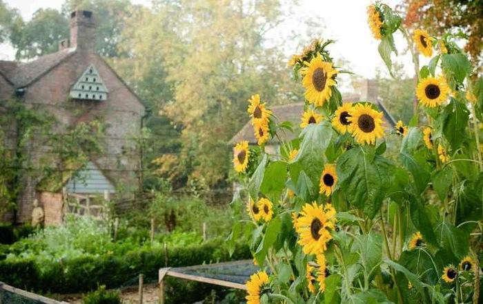 700_walnuts-farm-dovecote-sunflowers