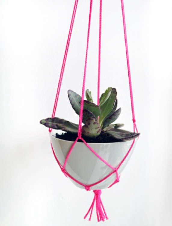 pink-plant