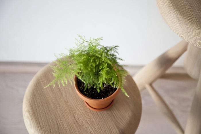 5 favorites mini houseplants for apartment living gardenista - Small plants for indoors ...