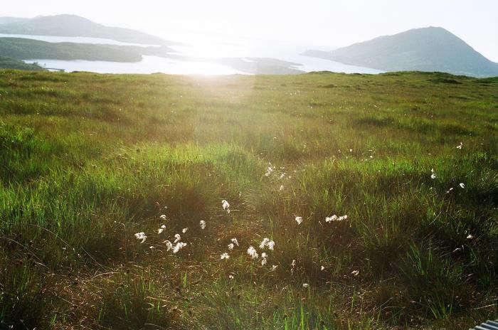 700_diamond-hill-ireland-akiko-03