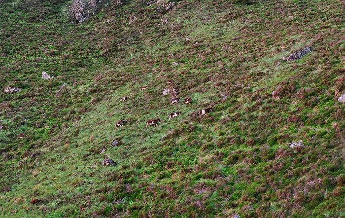 700_diamond-hill-ireland-akiko-04