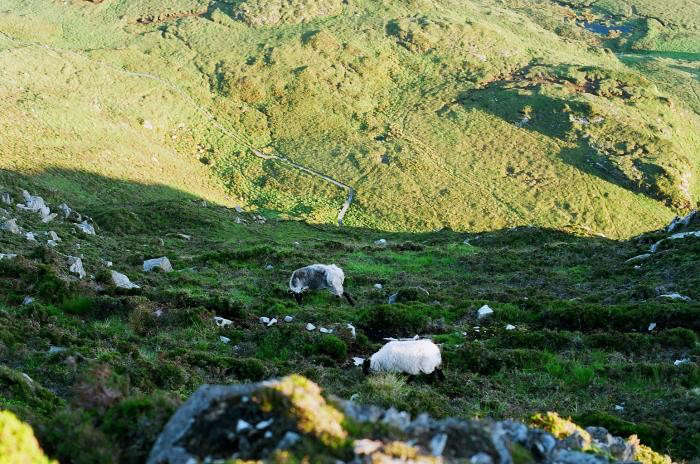 700_diamond-hill-ireland-akiko-05