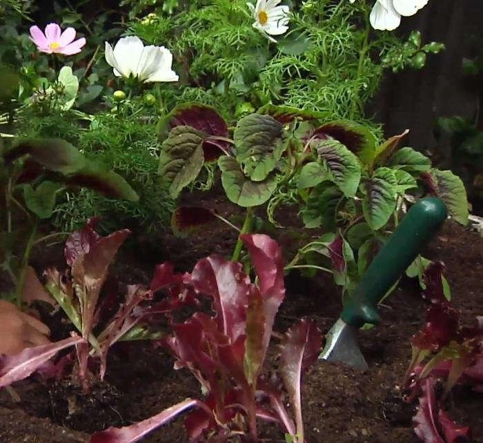 700_herb-garden-rehab-2